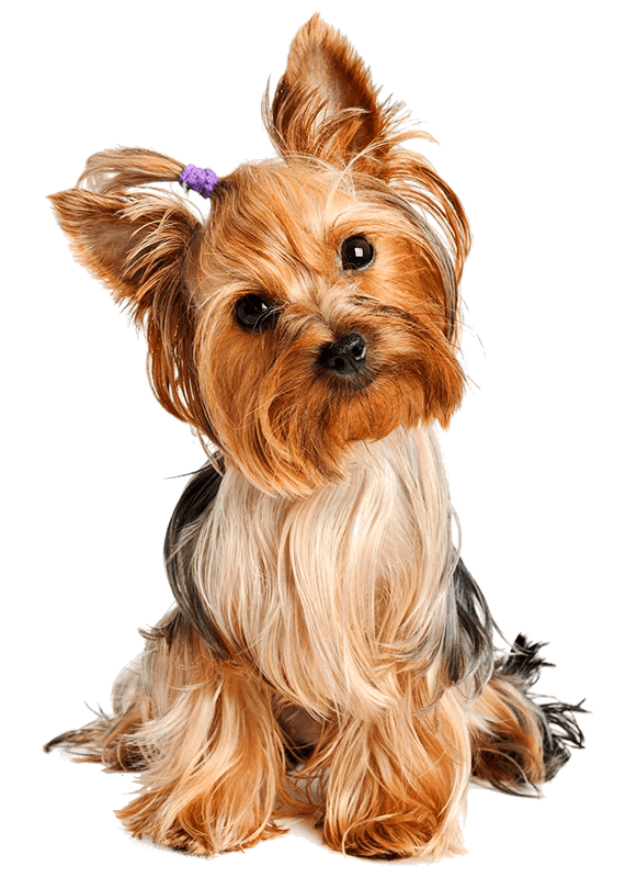 EBOOK-YORKIE-1